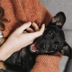 Bridgend and Newport Among UK's Top 5 Pet-Friendly Places To Live