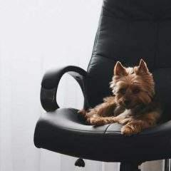 Birthday bonuses and 'dog days' are among employer-favoured job perks